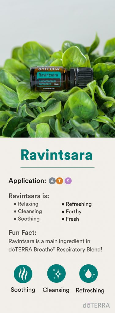 doTERRA Ravintsara Infographic - February 2020 Product of the Month